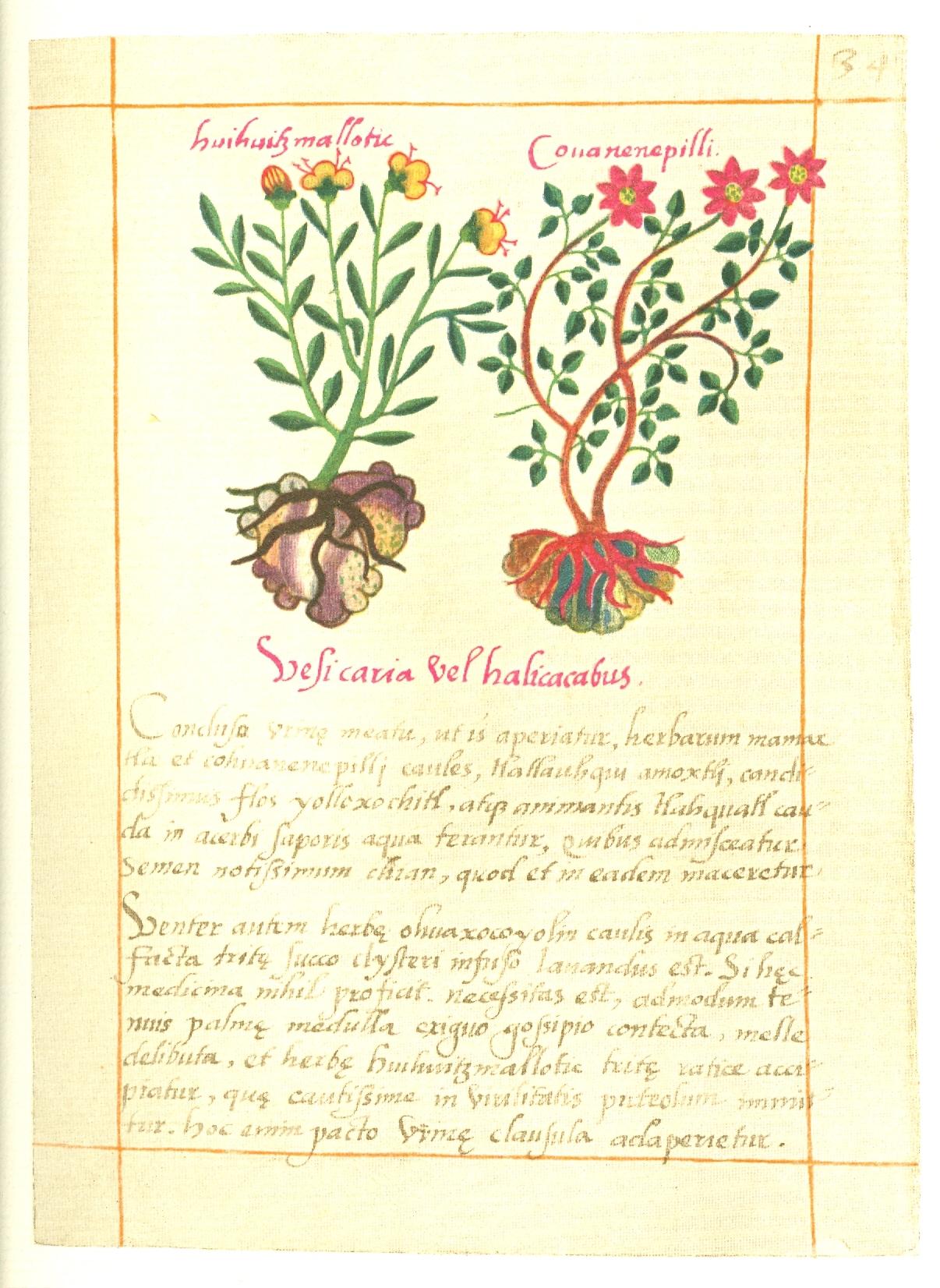 aztec medicine used today